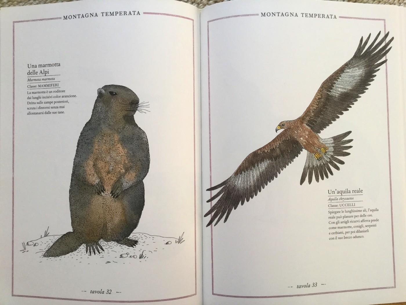 INVENTARIO ILLUSTRATO DEGLI ANIMALI Emmanuelle Tchoukriel e Virginie Aladjidi Ippocampo Edizioni