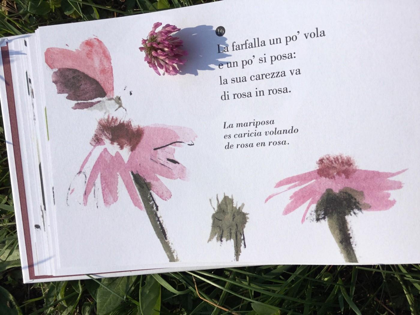 poemario_campo_Antonio_palacios_leticia_ruifernandez_orecchio_acerbo_galline_volanti