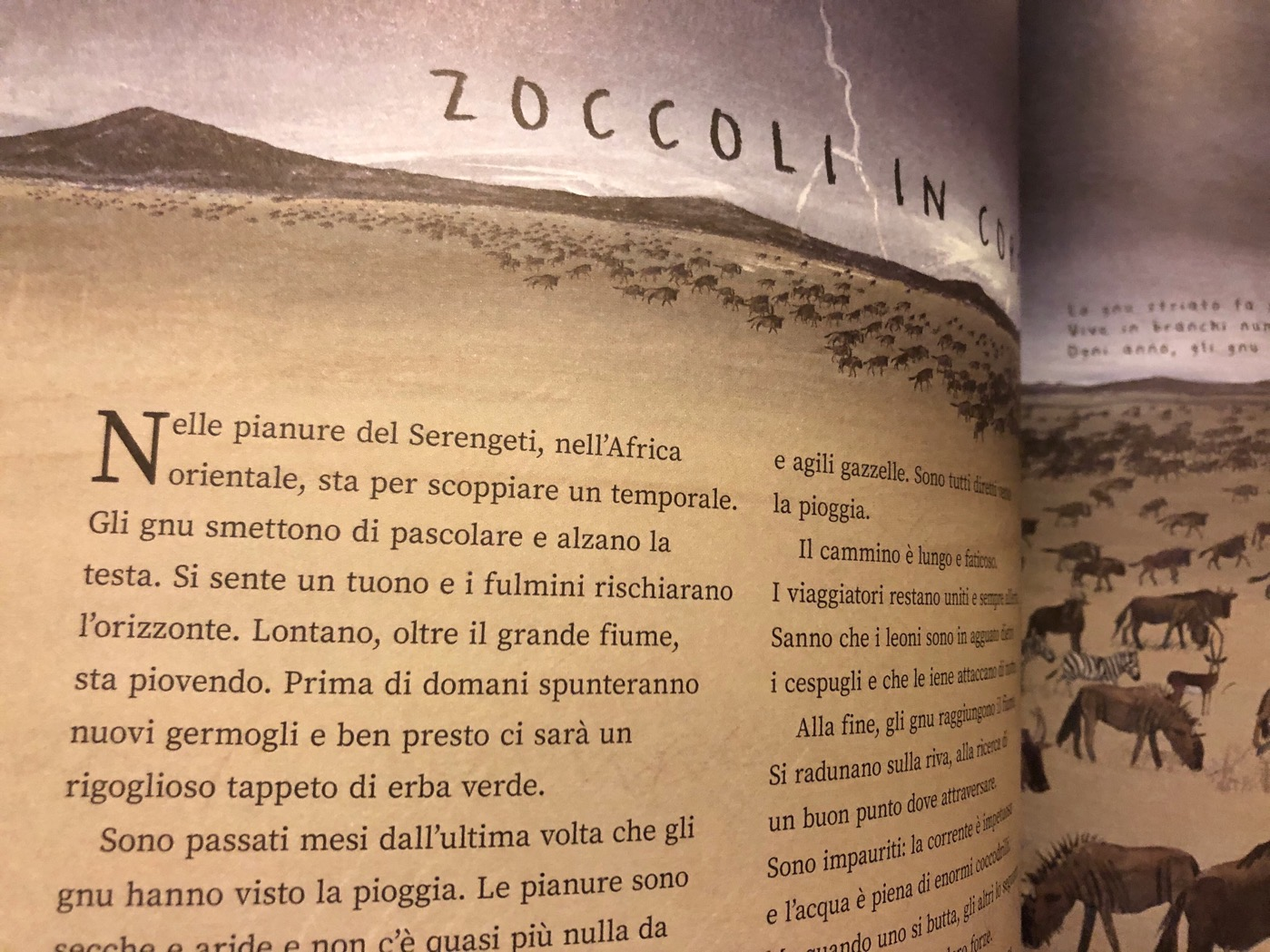 migrazioni-mike-unwin-jenni-desmond-editoriale-scienza_4
